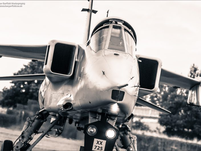 Big cats on the prowl - RAF Cosford