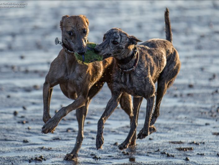 Dogs at Brean Sands - 2015