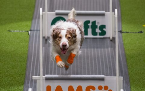 Crufts 2018 Flyball
